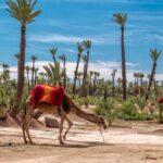 marrakech que faire activites